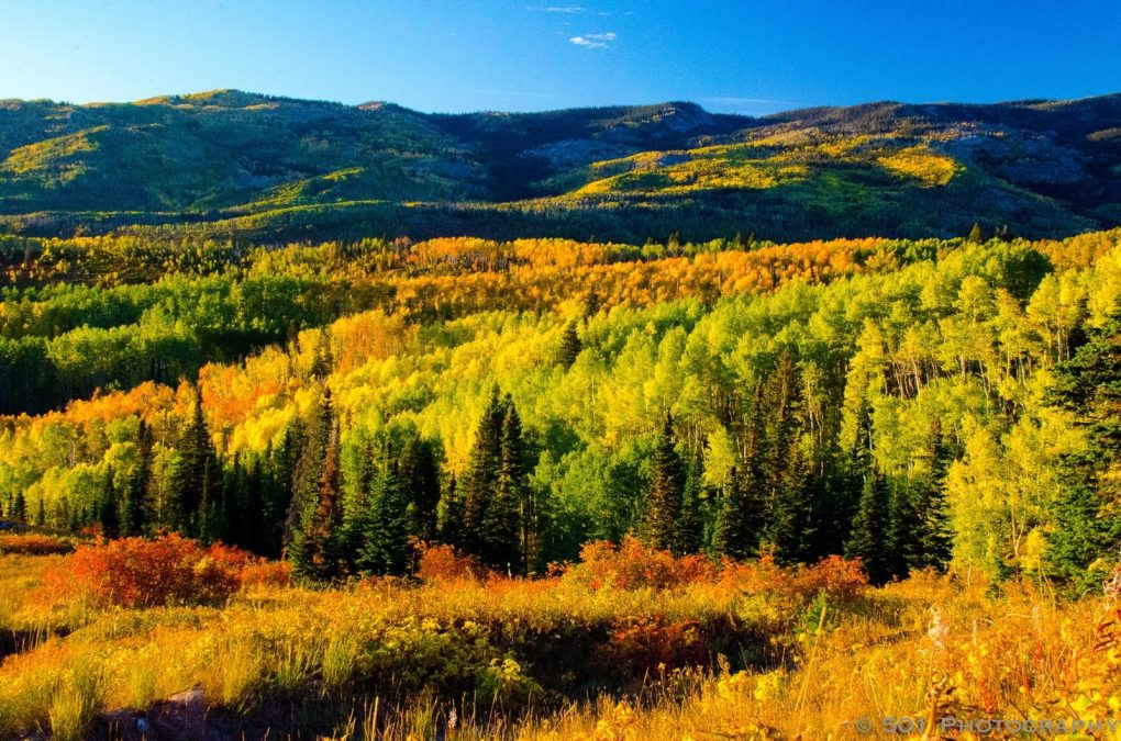 STEAMBOAT'S SPECTACULAR FALL FOLIAGE
