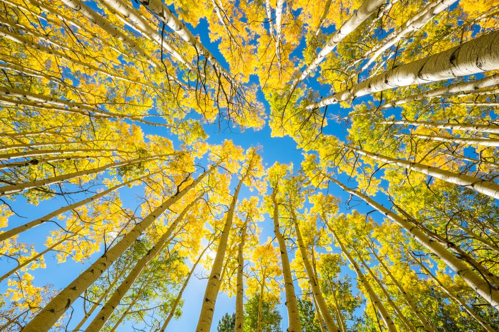 GOLD RUSH – CAPTURING THE BEAUTY OF STEAMBOAT'S FALL FOLIAGE