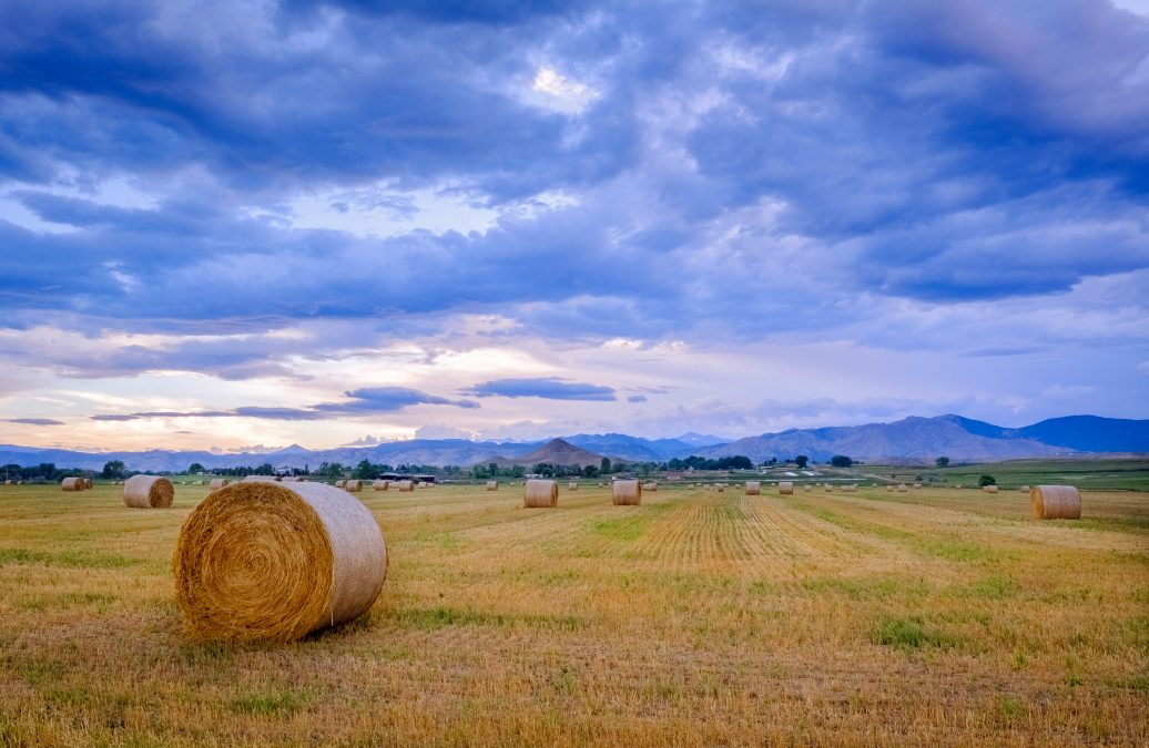 HOMEGROWN: SUPPORTING LOCAL RANCHERS WITH THE COMMUNITY AGRICULTURE ALLIANCE