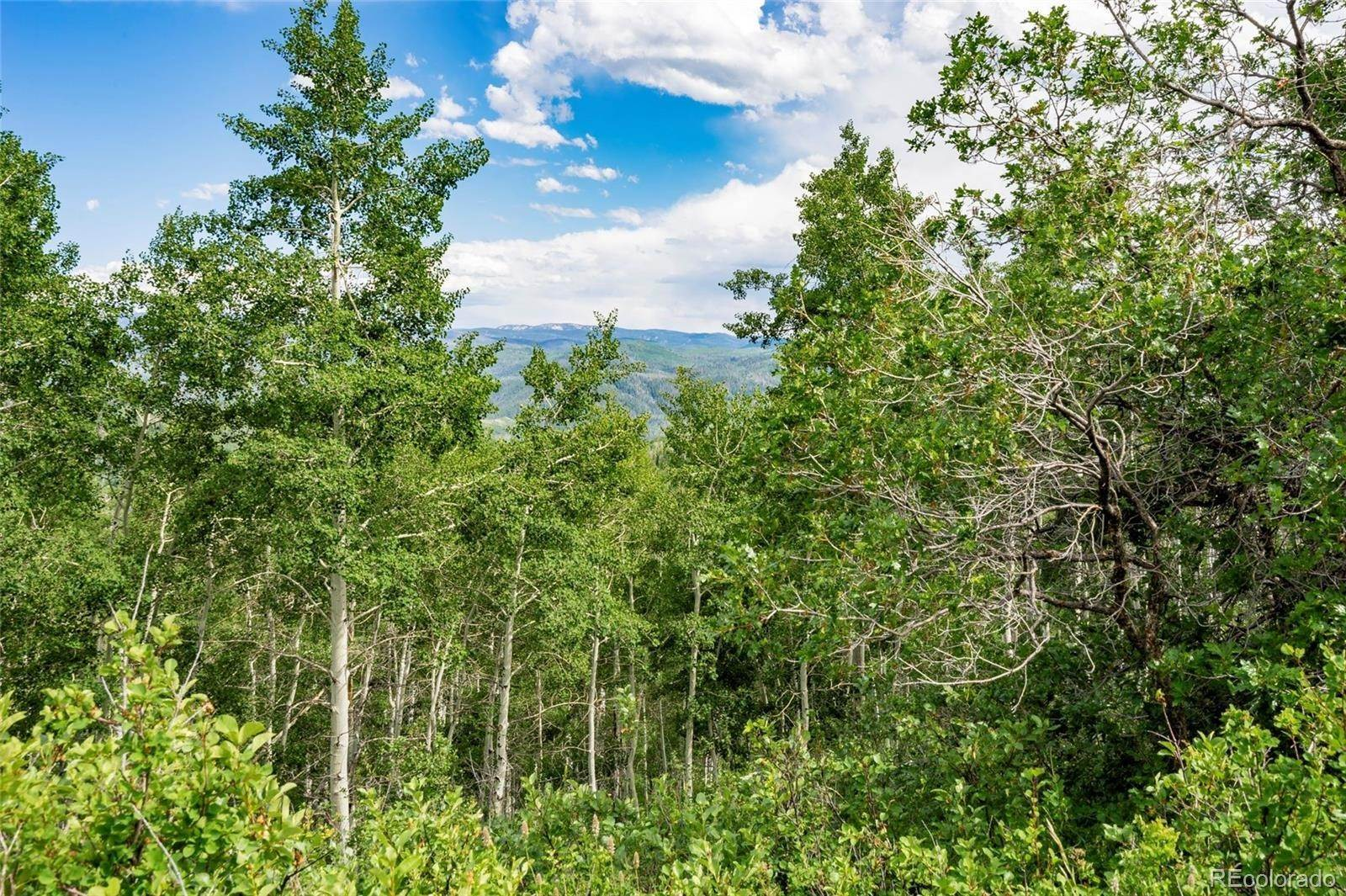 Land for Sale at 26320 Beaver Canyon Drive Clark, Colorado 80428 United States