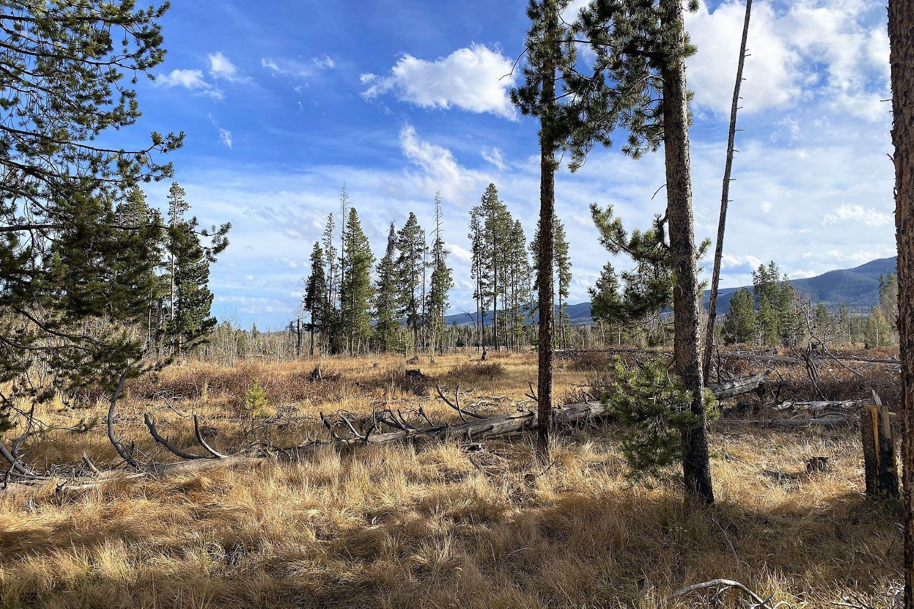 2. Land for Sale at Gorgeous Views With Mature Trees & Open Space TBD Halter Trail Oak Creek, Colorado 80467 United States